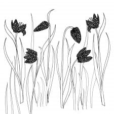 Snakeshead fritillaries black and white clip art download